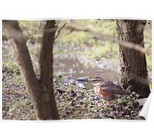 Redwing In The Undergrowth Poster