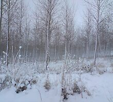 Plantation in snow by hannahowen