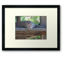 No Monkey Business - By Paul Campbell Photography Framed Print