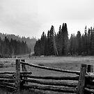 Fenced In by HeavenOnEarth