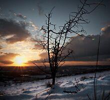 Bluebell Winter by JayteaUK