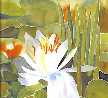 Water Lily by Enoeda