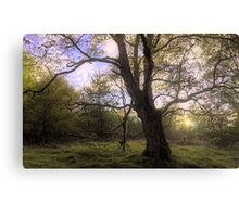 Characterful Tree Canvas Print