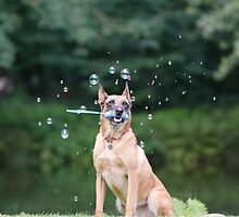 Dog and Bubbles by franceslewis