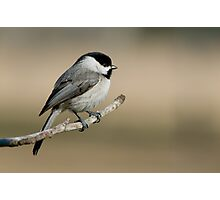 Meditative Chickadee Photographic Print