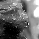 Drops  by Melissa  W