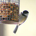 Chickadee at Peanut Feeder * by Laurel Talabere