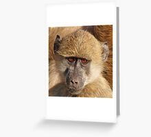 Mister Inquisitive Greeting Card