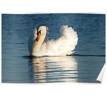 Swan Lake Beauty Poster