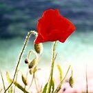 poppy by christopher  bailey