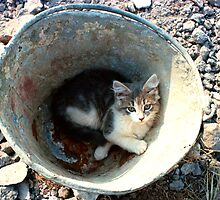 bucket cat by CatharineAmato
