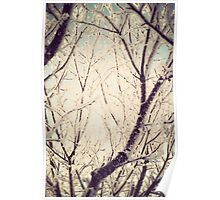 Retro Trees in Hoarfrost Poster