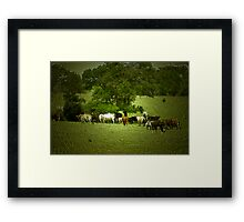 Cattle Drive ? Framed Print