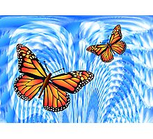 Butterflies in a Blue Sky Photographic Print
