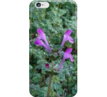 Tea plant iPhone Case/Skin
