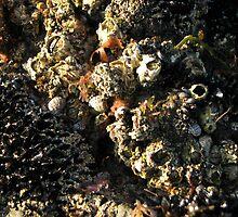Of the sea by Karen Doidge