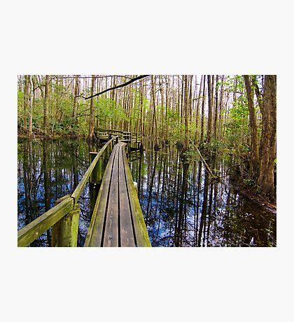 Cypress Boardwalk Photographic Print