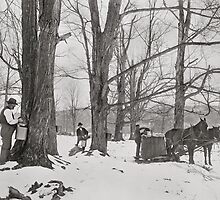 Vermont Maple Sugar Camp, 1906 by historyphoto