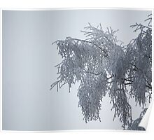 Frosty Tree Poster