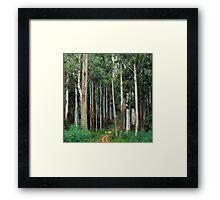 Mountain Ash Forest Framed Print