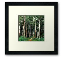 Mountain Ash Forest Framed Print