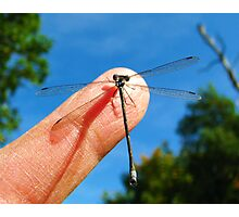 Damselfly on a Blue Summer Day  Photographic Print