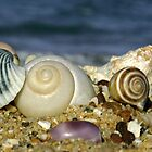 Shells by Sally  Djurovich
