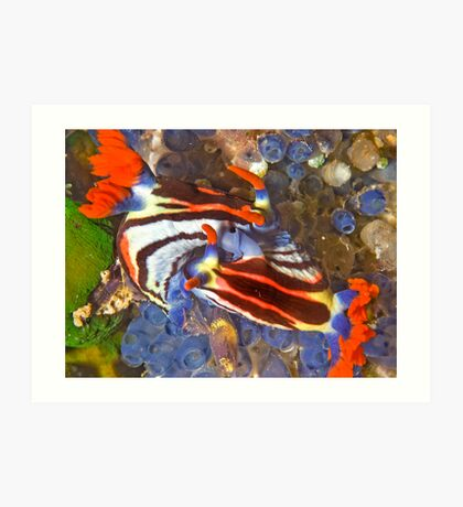 Nembrotha Nudibranch Mating Art Print