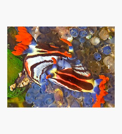 Nembrotha Nudibranch Mating Photographic Print