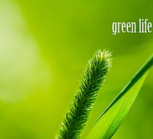 Green Grass And Sun - Green life by luckypixel