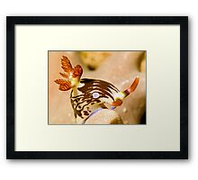 Nudi Taking a Bow Framed Print