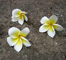 Fallen Thai Blooms by M-EK