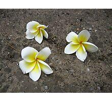 Fallen Thai Blooms Photographic Print
