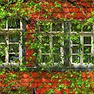 Shaded Windows by Hans Kawitzki