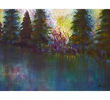 Sunlit Forest Photographic Print