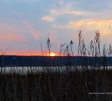 Sunset   Rocky Point, New York  by © Sophie W. Smith