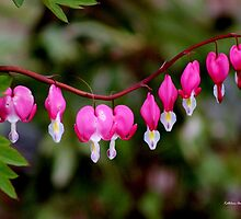 Hearts on a String by Kathleen Daley