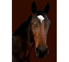 Mr Horse Photographic Print