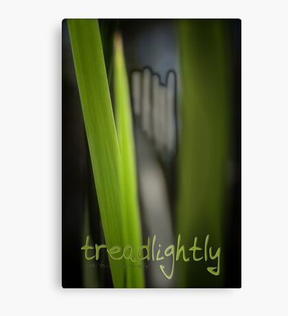 Tread Lightly © Vicki Ferrari Canvas Print