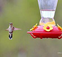 Ruby-throated Hummingbird (Female) by Kathleen Daley