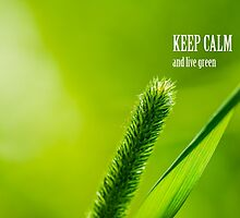 Green Grass And Sun - Keep calm and live green by luckypixel