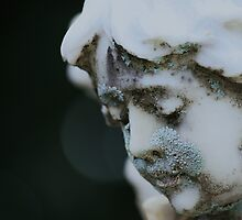 Lichen Angel by Diana Forgione