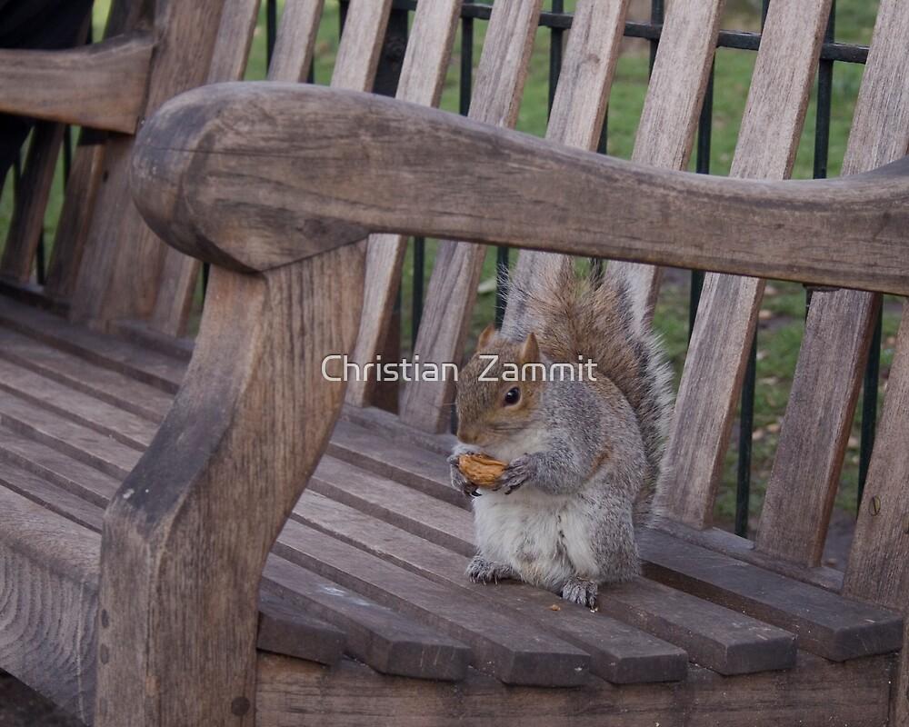 Squirrel by Christian  Zammit