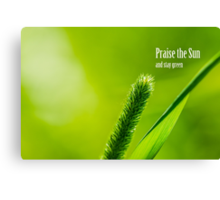 Green Grass And Sun - Praise the Sun and stay green Canvas Print