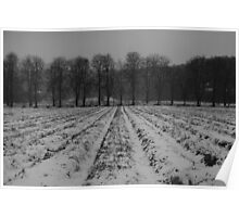 Trees and snowy furrows Poster