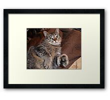 THE QUEEN IS NOT AMUSED Framed Print