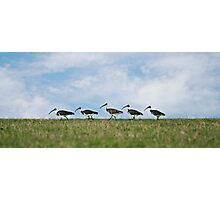 Follow the leader Photographic Print