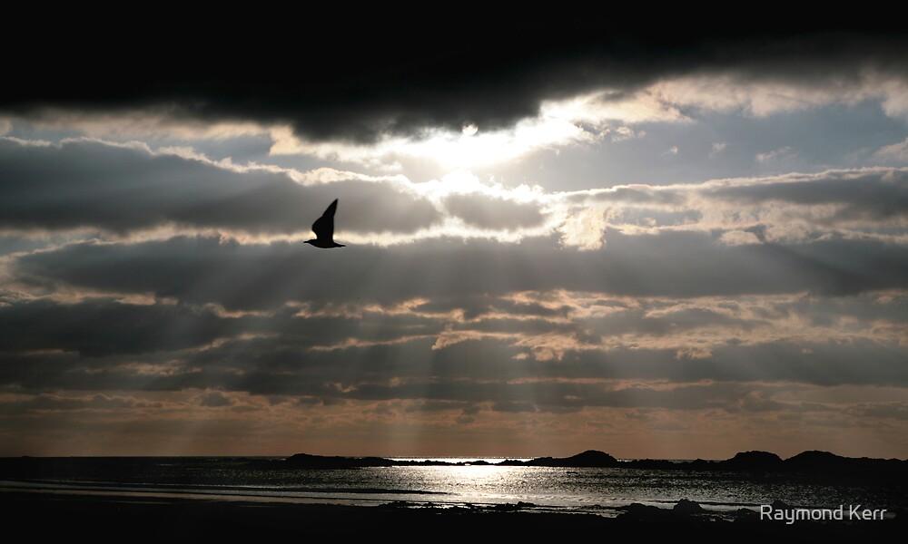 """Lone Gull"" by Raymond Kerr"