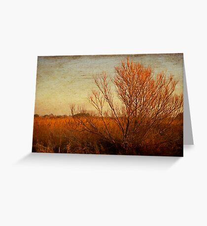 Orange winter Greeting Card