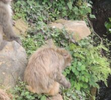 Monkeys at Arashiyama Sticker
